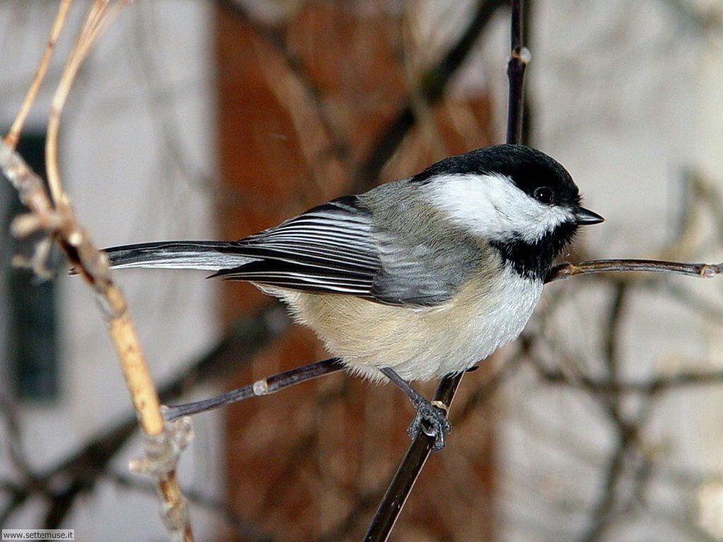 Foto di Uccelli 063