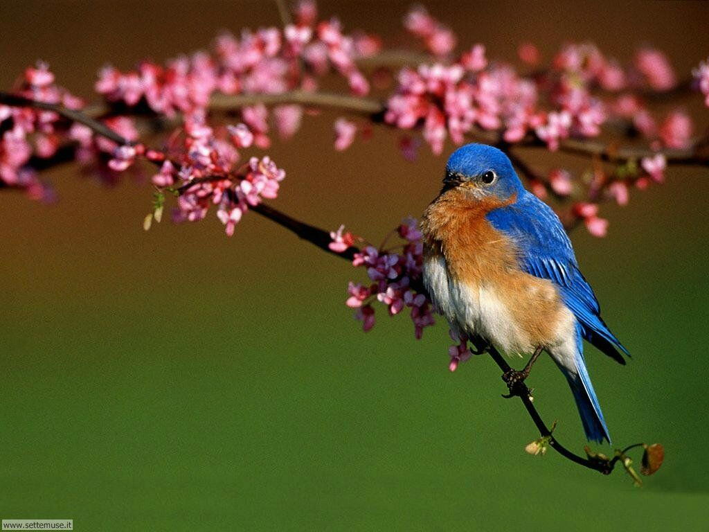 Foto di Uccelli 067