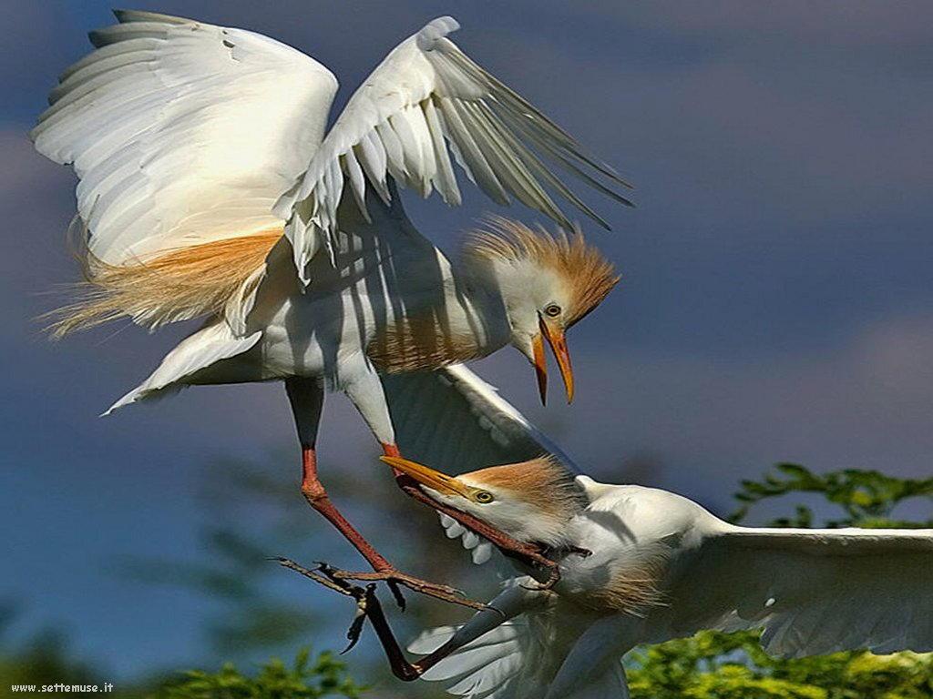 Foto di Uccelli 072