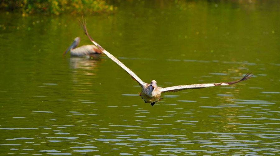 Foto di Uccelli 074