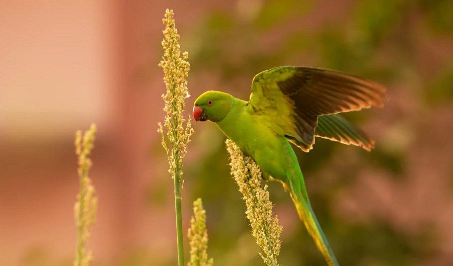 Foto di Uccelli 075