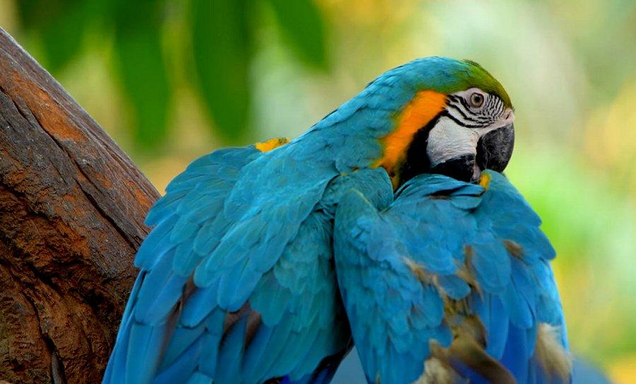 Foto di Uccelli 085