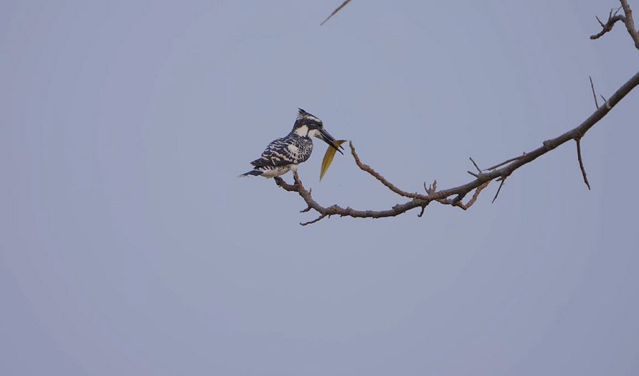 Foto di Uccelli 090
