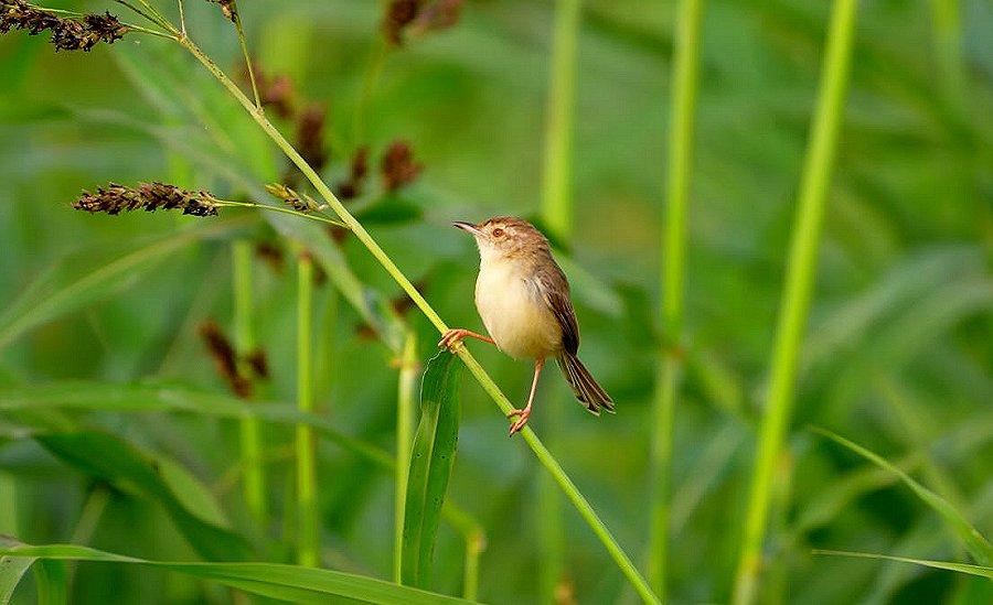 Foto di Uccelli 095