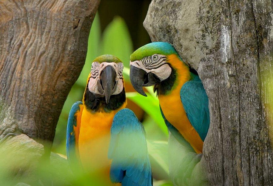 Foto di Uccelli 096