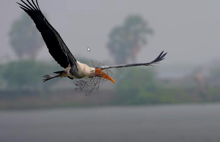 Foto di Uccelli 100