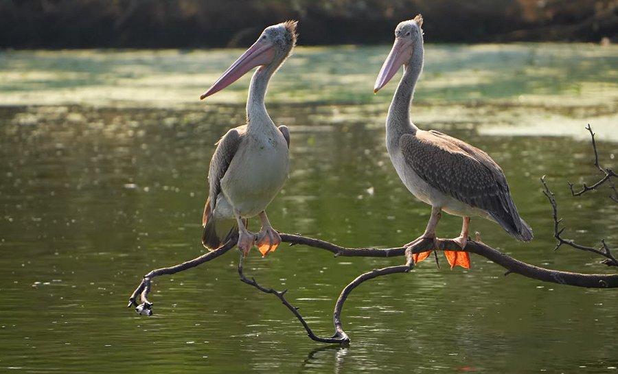 Foto di Uccelli 103