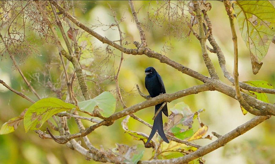 Foto di Uccelli 104