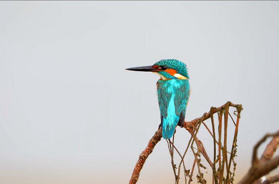 Foto di Uccelli 105