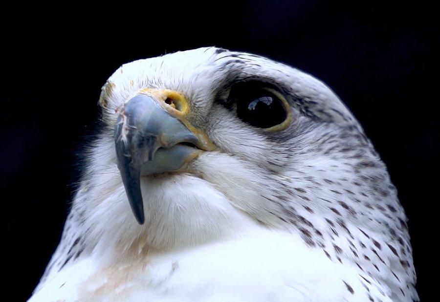 Foto di Uccelli 106