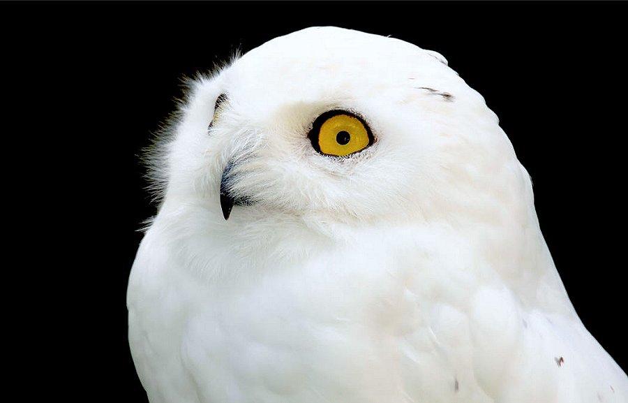 Foto di Uccelli 108