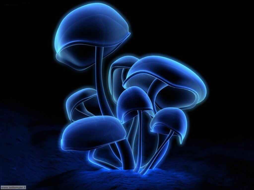 Foto Digital Art 097 Funghi allucinogeni