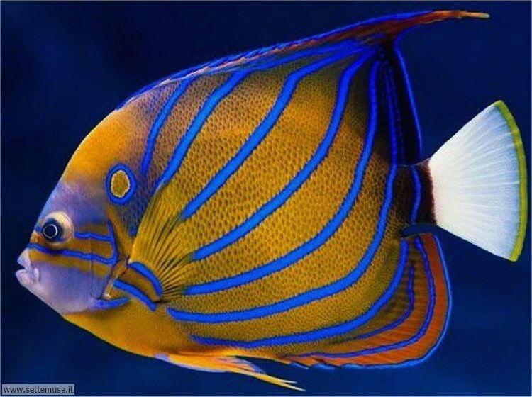 bellissimi pesci 001