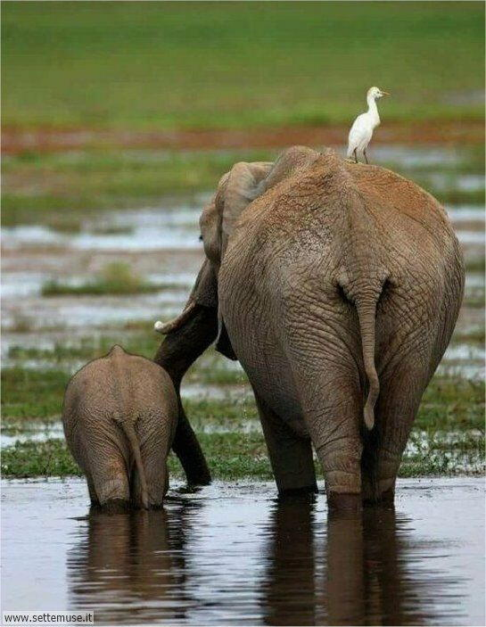 elefanti 001