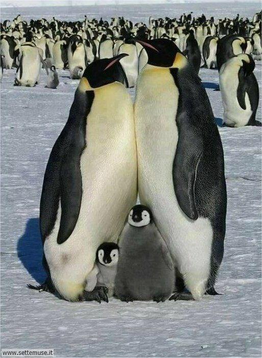 pinguini 001