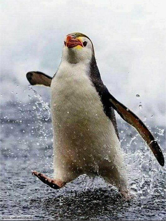 pinguini 002