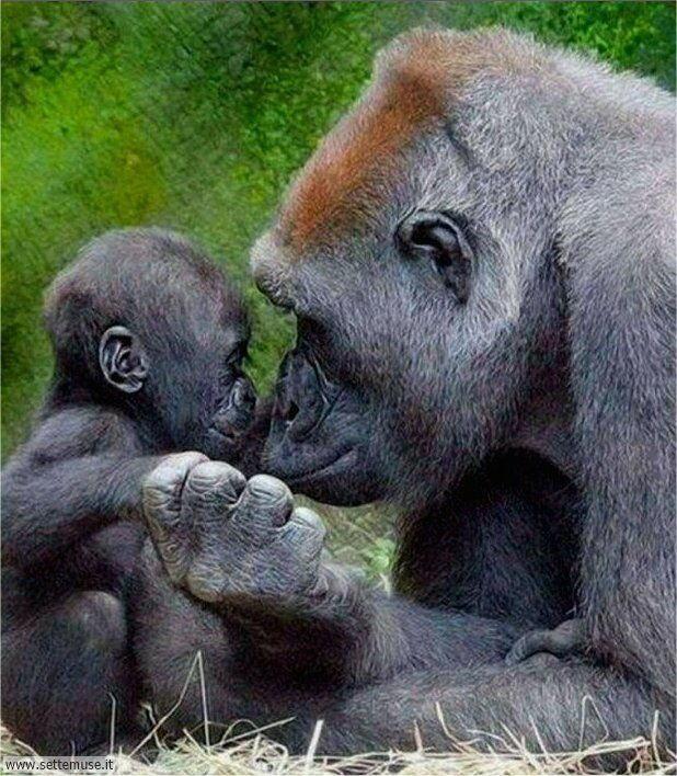 scimmie 001