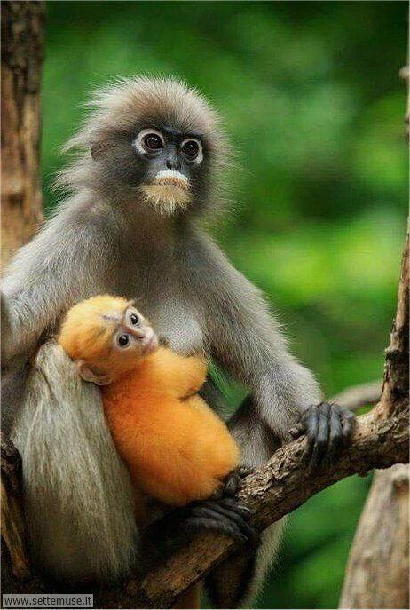 scimmie 002