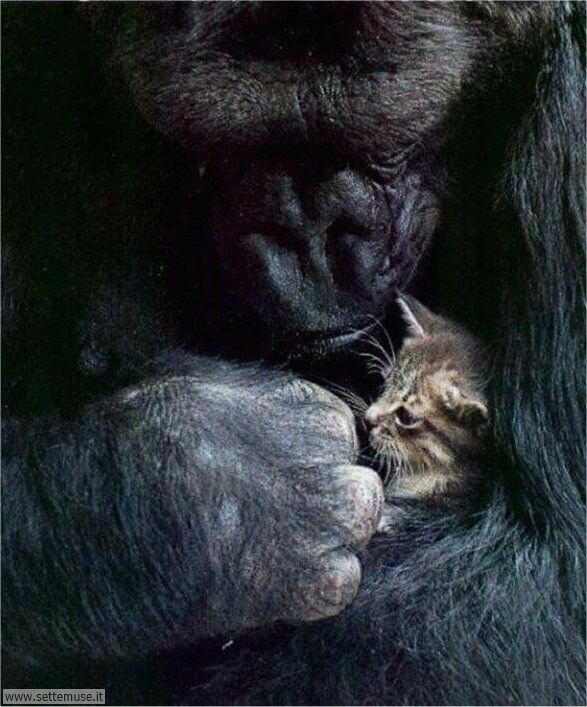 scimmie 004