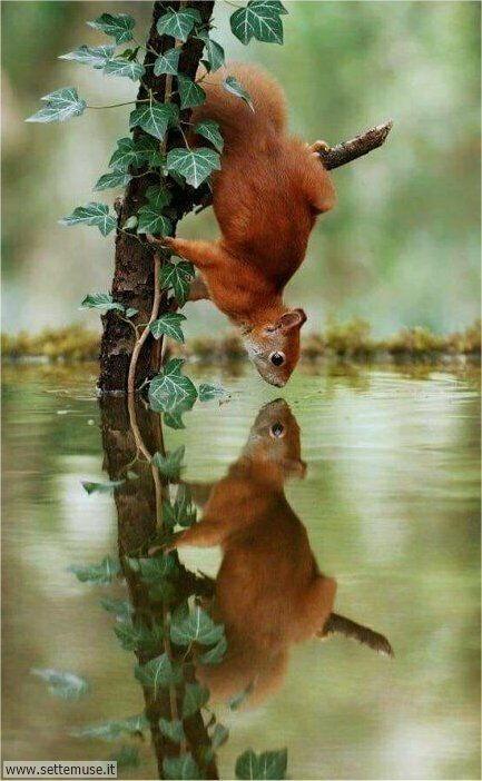 scoiattoli 001