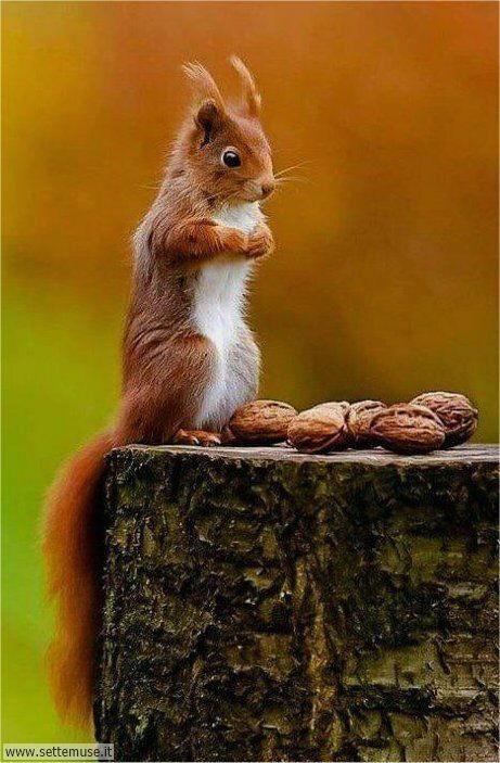 scoiattoli 002
