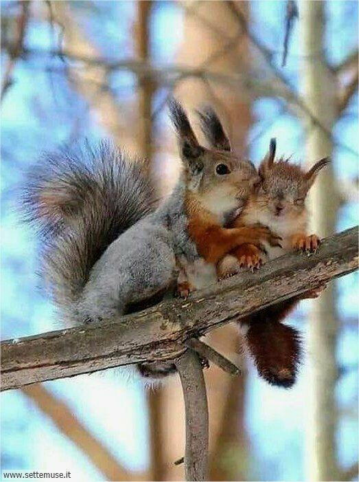 scoiattoli 005
