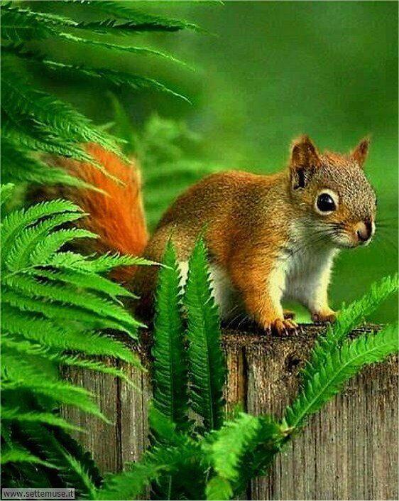 scoiattoli 007