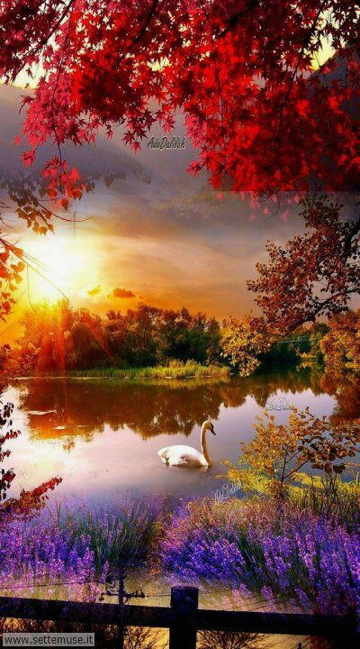 arte e dipinti su panorami autunnali, alberi d'autunno