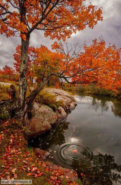 arte e dipinti su foto autunno 05