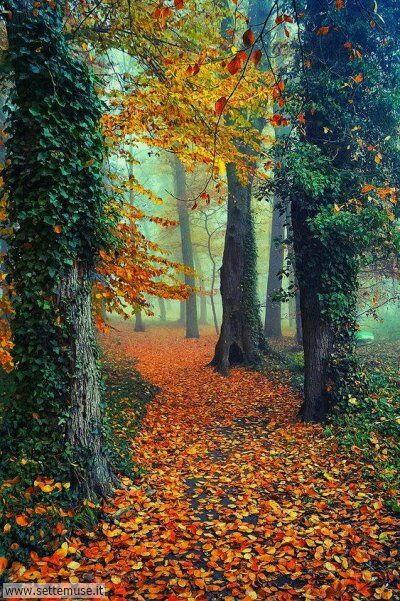 arte e dipinti su bosco