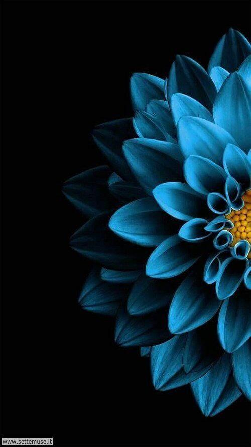 arte e dipinti su foto fiori 09