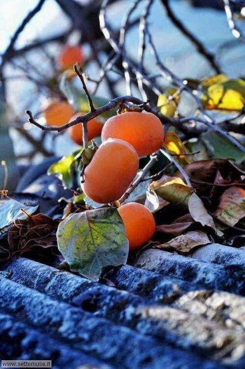 arte e dipinti frutta e verdura, natura morta