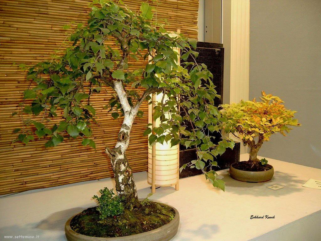 bonsai 01