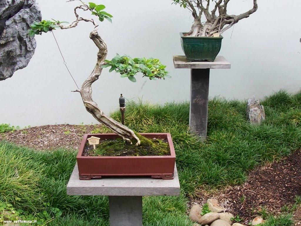bonsai 07
