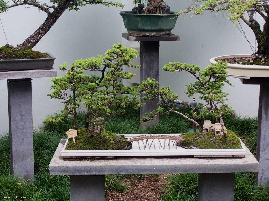 bonsai 08