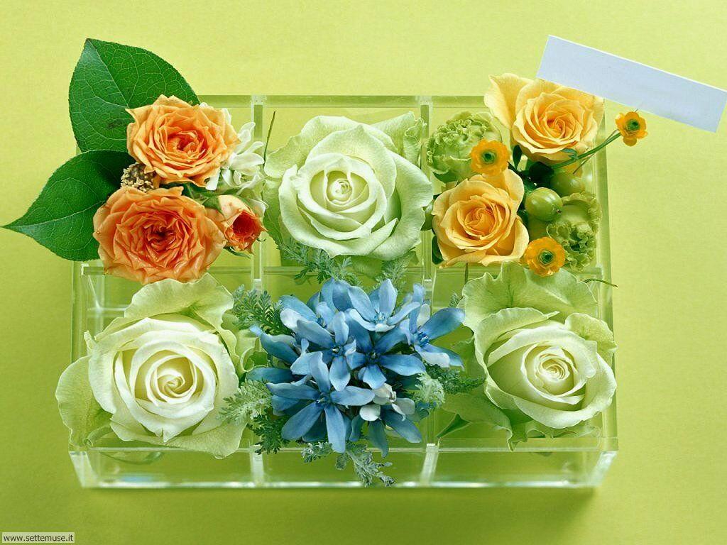 foto di piante e fiori per sfondi