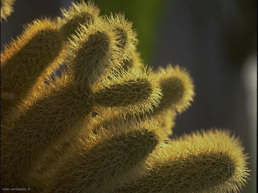 cactus 93