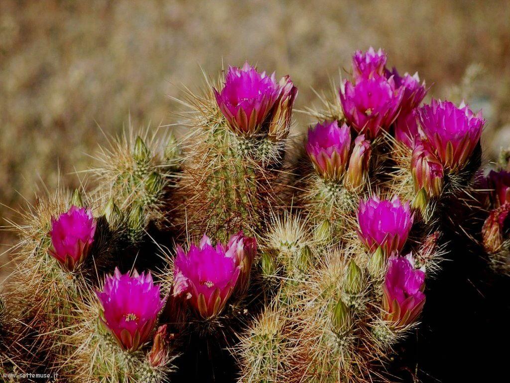 cactus 100
