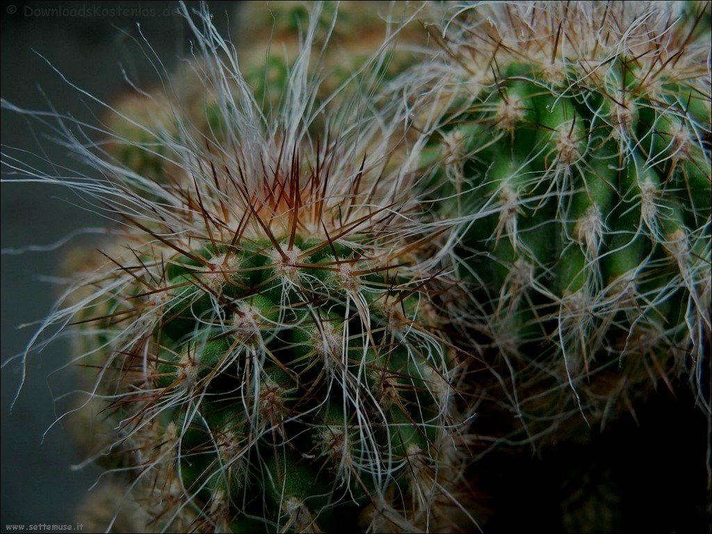 cactus 102
