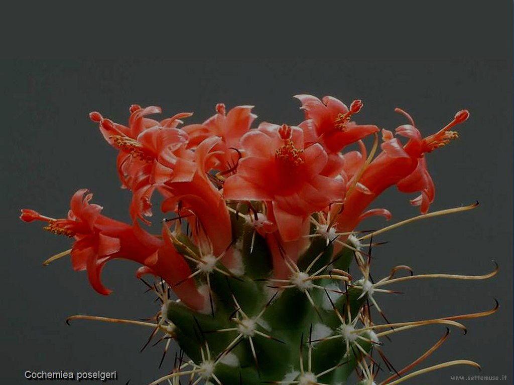 cactus 201