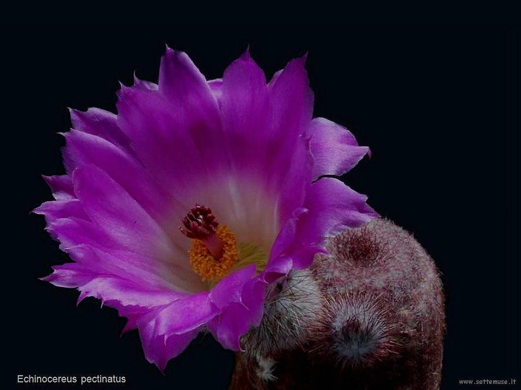 cactus 202