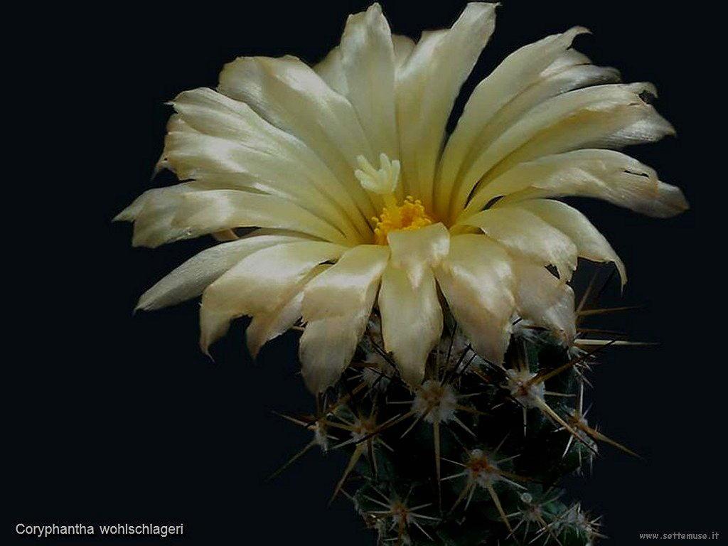 cactus 203