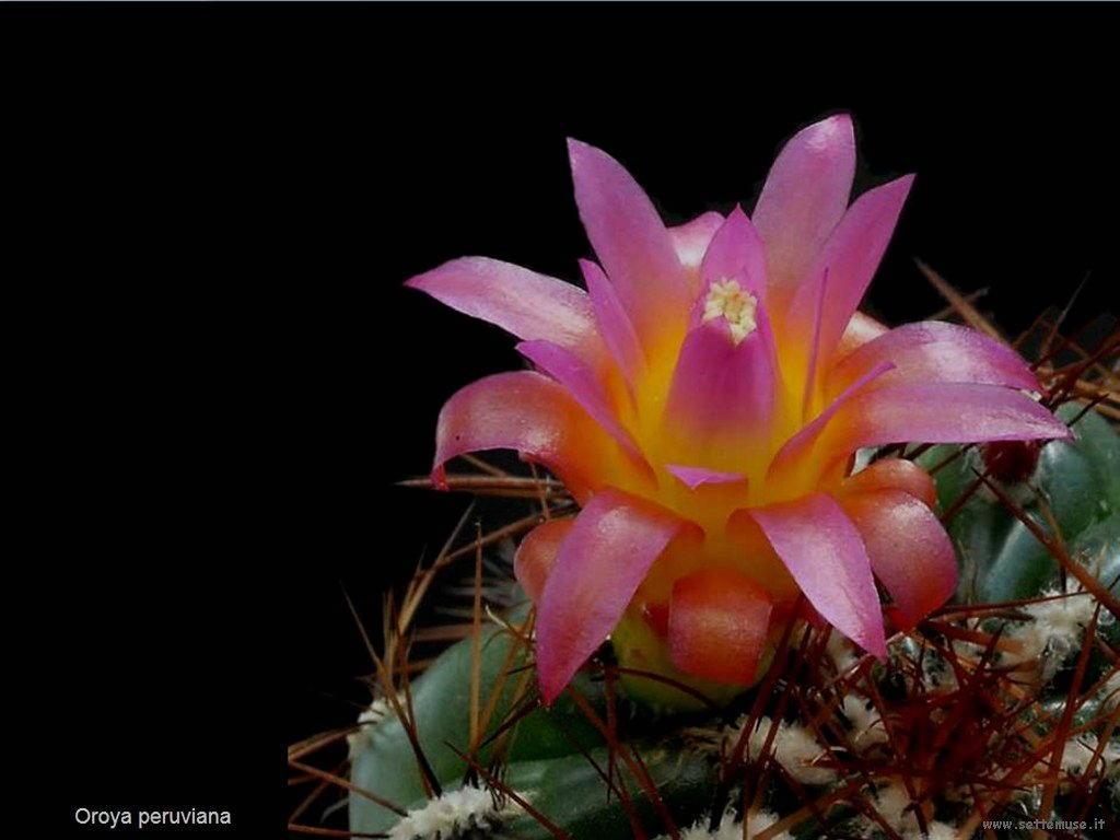 cactus 209