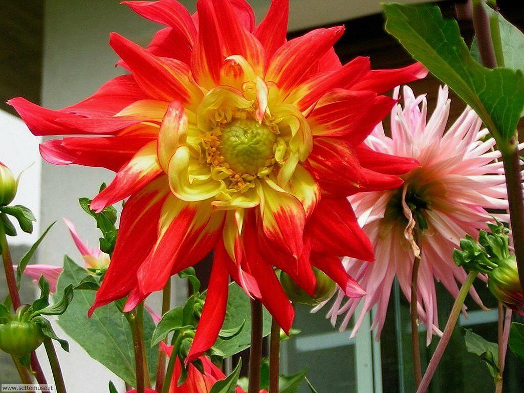 foto di fiori vari per sfondi pag. 1