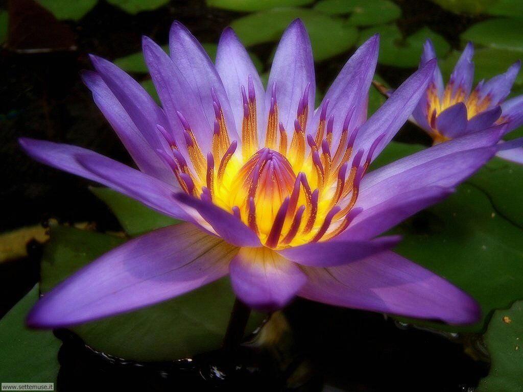 Foto fiori 2 per sfondi for Piante fiori