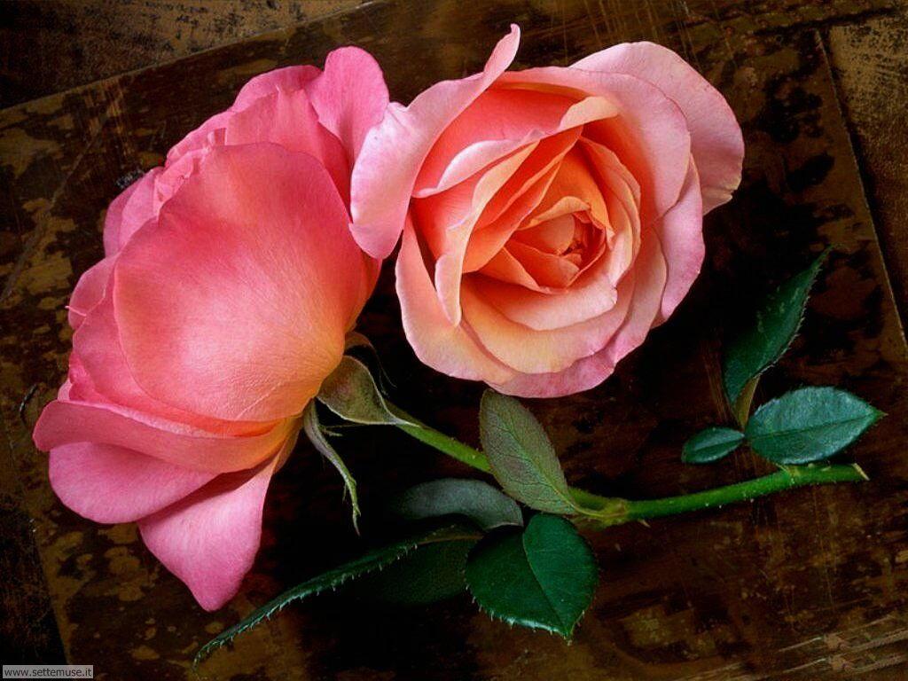foto di fiori vari per sfondi pag.2
