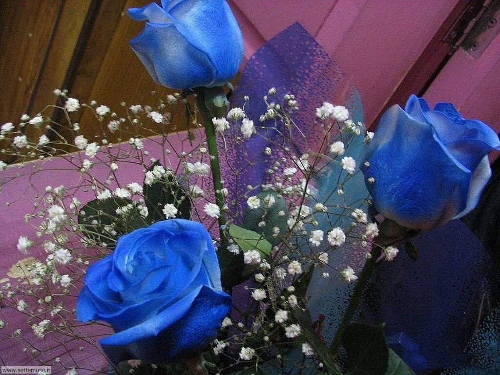 fiori 3 2