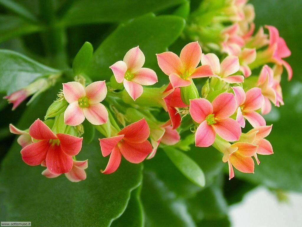 foto di fiori vari per sfondi pag.3