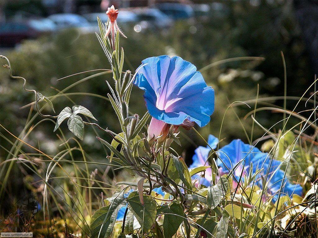 fiori 3 8