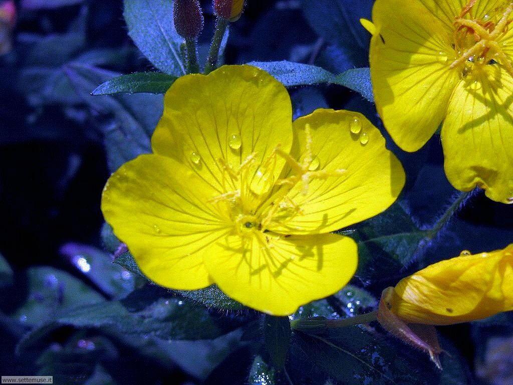 fiori 3 9